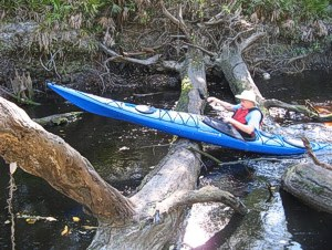 deadfalls on the Alapahoochee River